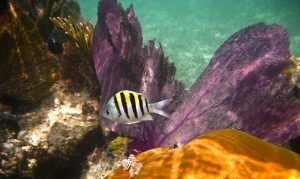 Има 120 вида корали