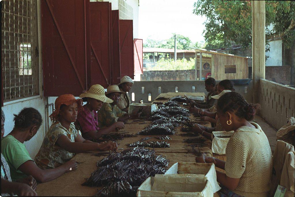 Ванилията често се отглежда в бедни и изостанали райони, което води до невъзможност за модернизиране на производството.
