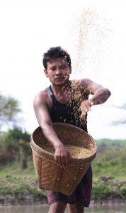 Археолозите са открили парчета от ориза на място, наречено Шаншан