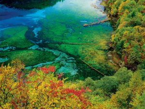 Петцветното езеро е разположено в долината Jiuzhaigou