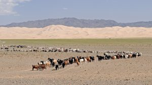 В пустинята Гоби има живот