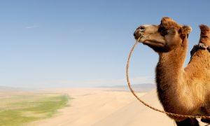 Най-доброто време да посетите пустинята Гоби