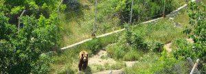 Като поемете към планината по отсрещния склон, се намира резерватът за вълци и мечки.