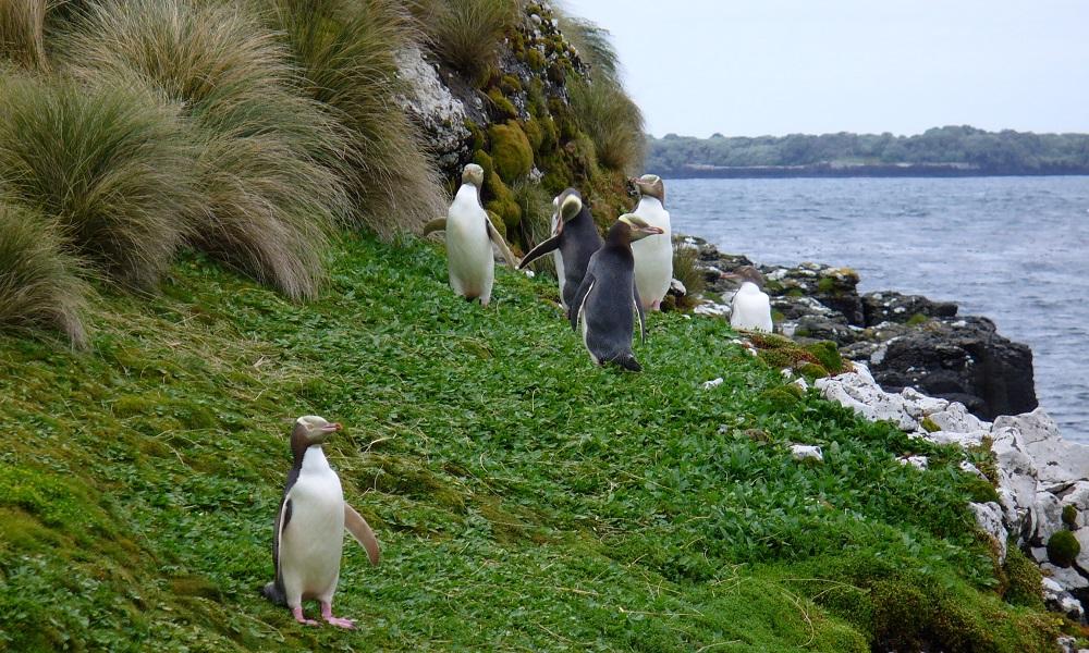 Субантарктическите острови