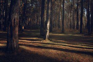 Бореалът представлява 29% от световната горска покривка.