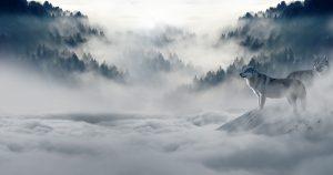 Бореалната гора е студена