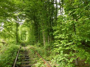 """"""" Тунела на любовта """" е изключително популярен в Украйна."""