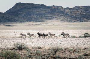 Национален парк Белзма, Алжир